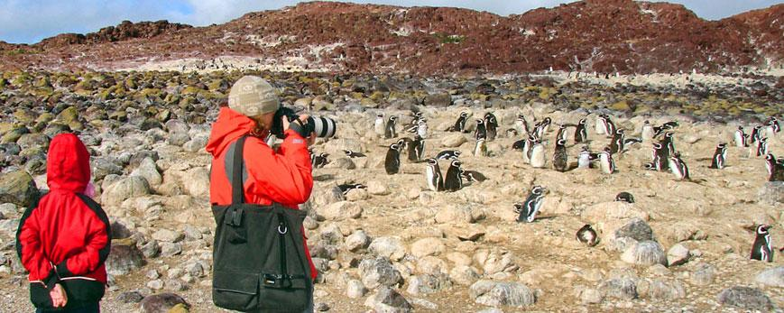 Vista panorámica de una de las colonias de Pingüino de Magallanes.